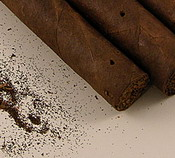 how to clean a humidor after tobacco beetles found